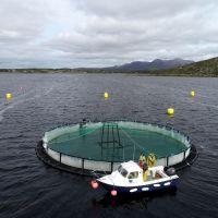 Çamlı Yem Besicilik,  Impaqt Projesi İle Akıllı Ve Sürdürülebilir Balık Yetiştiriciliğini Destekliyor!