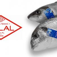 Balıkta İlk Helal Sertifikası Pınar Balık'ın