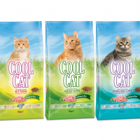 Cool Cat From Çamlı; The Right Choice For Your Cats!