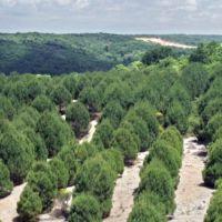 Çamlı'dan Ege Orman Vakfına Destek