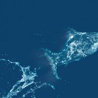 Çamlı Balık Yemi'nde Yeni Seriler: GrowMax ve MultiMax