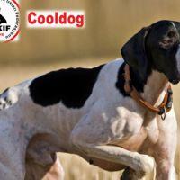 Cool Dog, AVKİF Ana Sponsoru Oldu