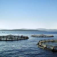 Pınar Balık'tan Yine Bir İlk