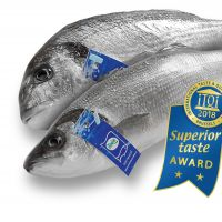 Sustainable Production and Superior Taste Awarded Fish From Çamlı