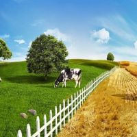 What Are The Benefits Of Grass And Pasture Improvement?