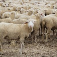 What Are The Points To Consider In Breeding Selection?