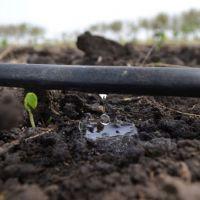 Damla Sulama İle Gübreleme: 'Fertigasyon' Nedir?