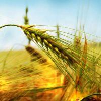 İklim Değişimleri Tarımı Etkiler Mi?