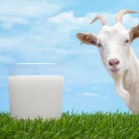 The Features Of Goat Milk and Its' Health- Wise Benefits