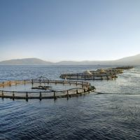 Does Aquaculture Disrupt the Ecological Balance of the Sea?