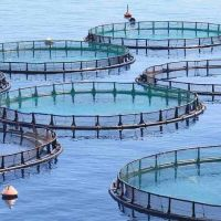 Is Aquaculture Affected From Seasonal Changes?