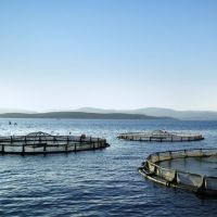 Can Aquaculture Be Made In All Of The Regions?