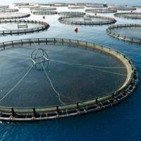 Are Aquaculture Fish Healthy?