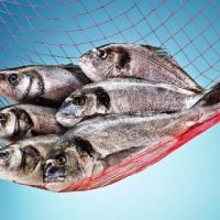 Can Aquaculture Production Be Made Every Season?