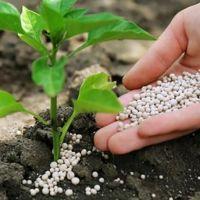 Organik Gübrenin Toprağa Faydaları