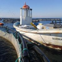 A Journey From The Past with Durmazlar Aquaculture