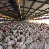 An Interview Upon Poultry Sector With Our Producer Mehmet Kaplan