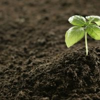 What Sort Of Things Should Be Done For Increasing The Soil Efficiency?