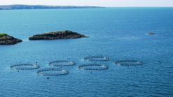 Facts About Fish Farms