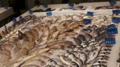 Dubai Balık Pazarı