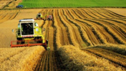 Agricultural Industry Sector in Turkey