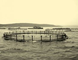 The First Integrated Aquaculture Facility Of Turkey
