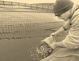 The First Extrude Fish Feed Production In Turkey