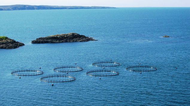 Balık Çiftlikleri Hakkındaki Gerçekler