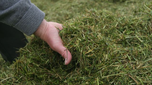 The Importance and Management of Roughage in Breeding Dairy Cattle Businesses