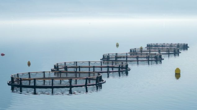 New Trends in Aquaculture