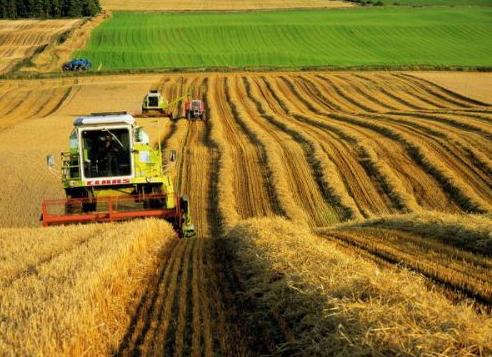 Türkiye' de Tarım Sanayi Sektörü